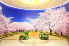 卒業生の皆様へ 大迫力の「桜」を贈ります【3/1~5/31】