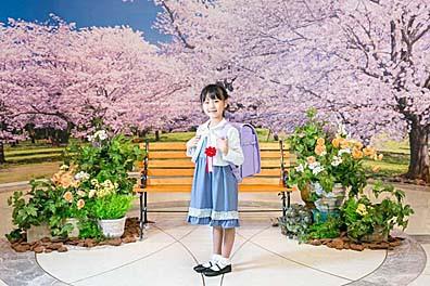 卒業生・新入生の皆様へ 大迫力の「桜」を贈ります【3/1~5/31】